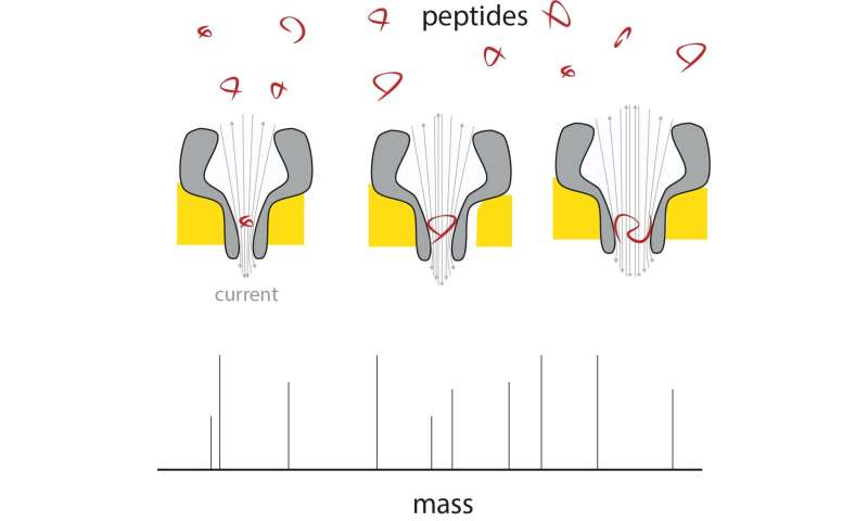 Nanopores make portable mass spectrometer for peptides a reality