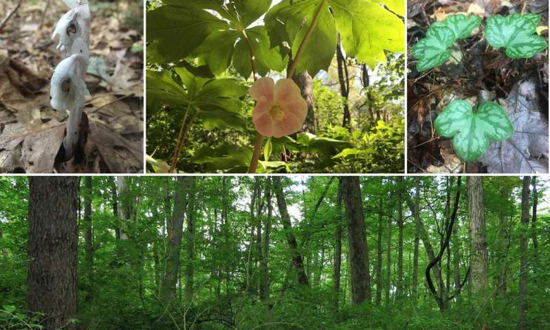 Native forest plants rebound when invasive shrubs are removed