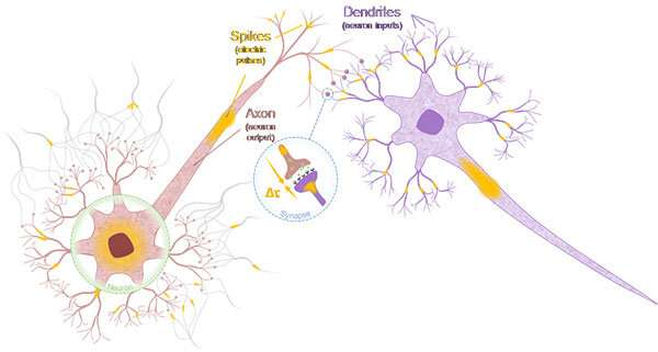 Neuron and synapse-mimetic spintronics devices developed