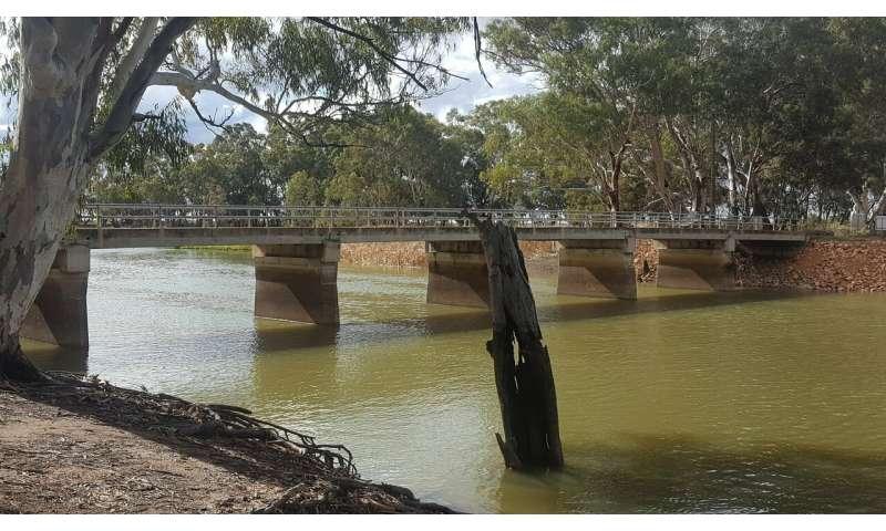 Neurotoxic cyanotoxins prevalent in eastern Australian freshwater systems study shows