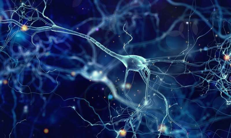 Neuronal Barcodes Shape Complex Networks In The Brain >> New Autism Research On Single Neurons Suggests Signaling Problems In