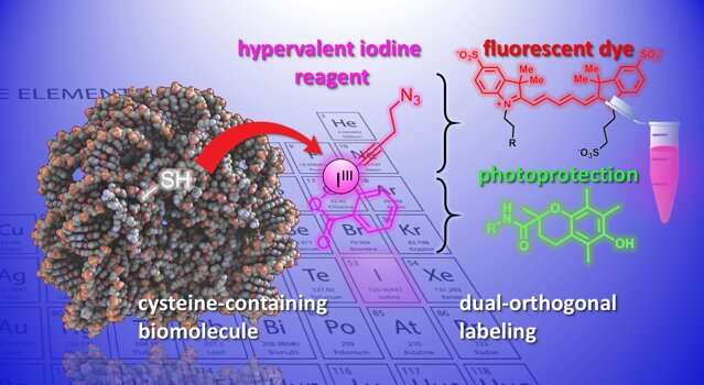 New chemical tools to modify and study biomolecules