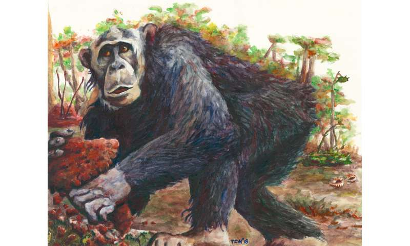 New chimpanzee culture discovered