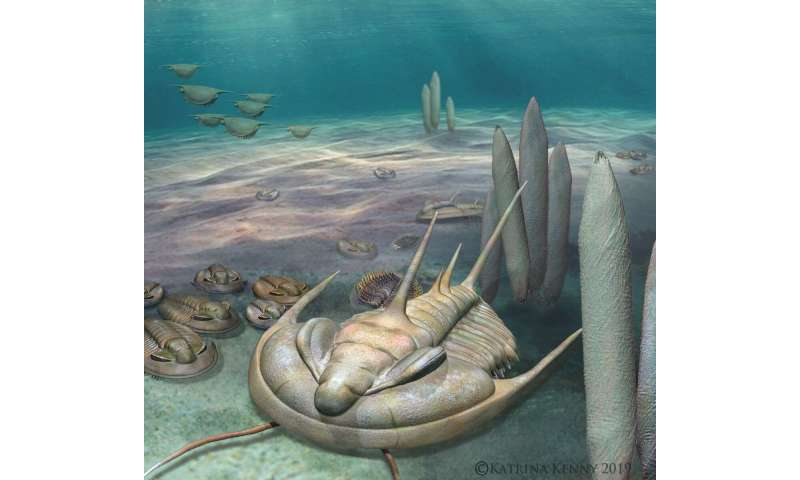New 'king' of fossils discovered on Kangaroo Island