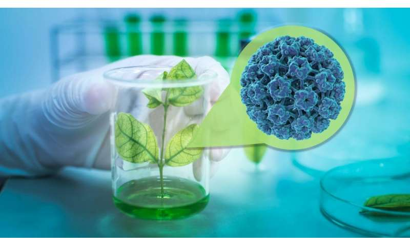 New plant-based vaccine at the forefront of more affordable HPV prevention