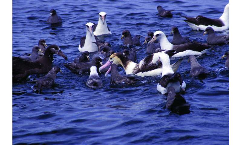New study—how to save a seabird