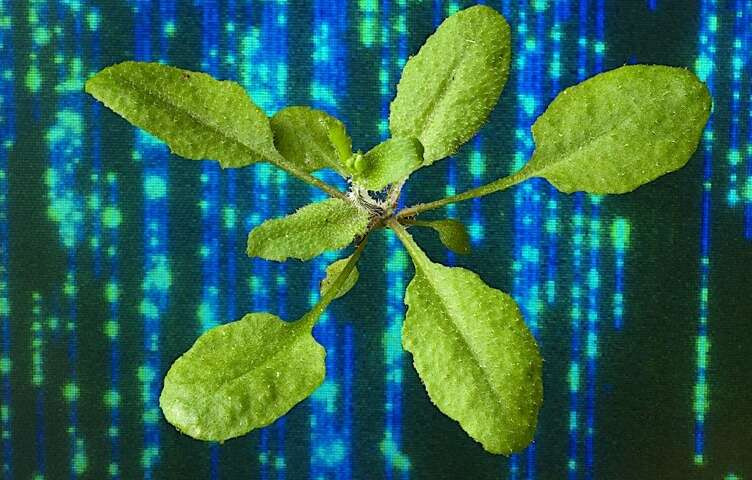 New technologies enable better-than-ever details on genetically modified plants