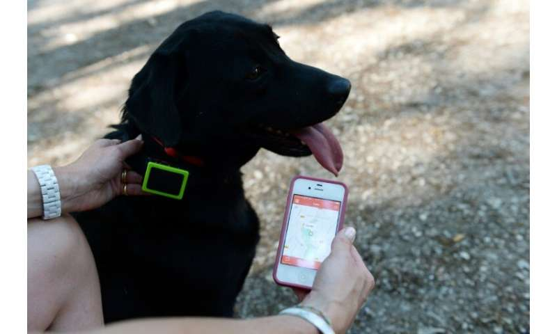 New tricks for old dogs: Wearable gadgets allow pet owners to see how much their animals exercise, sleep, or even relieve themse