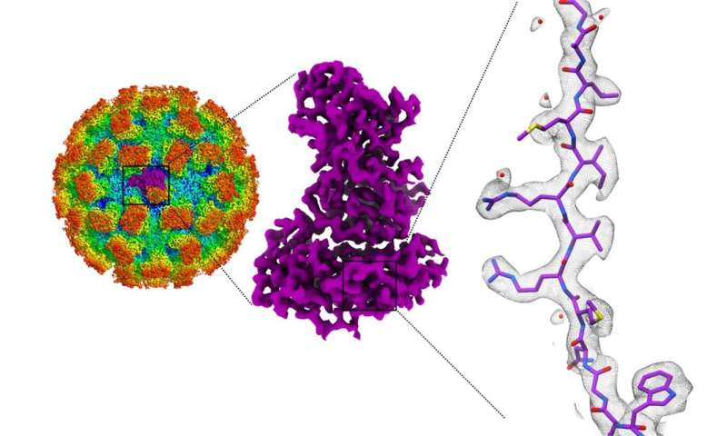 Norovirus structures could help develop treatments for food poisoning