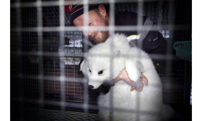 Norway is going ahead with plans to ban fur farms