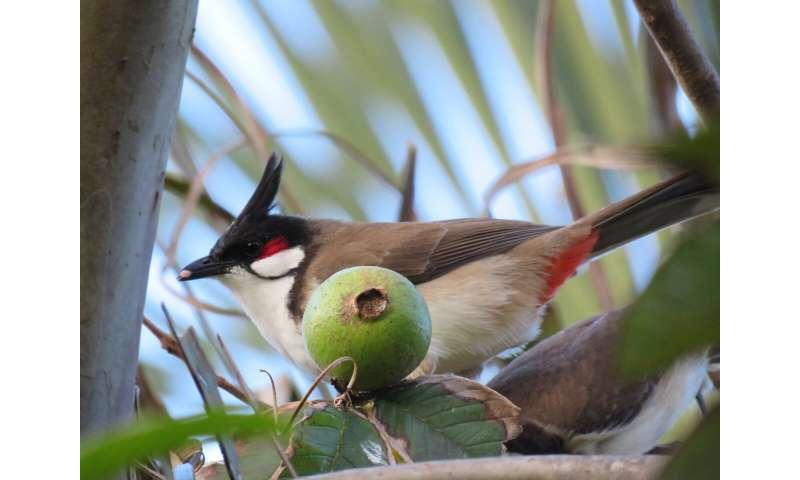 Novel Hawaiian communities operate similarly to native ecosystems