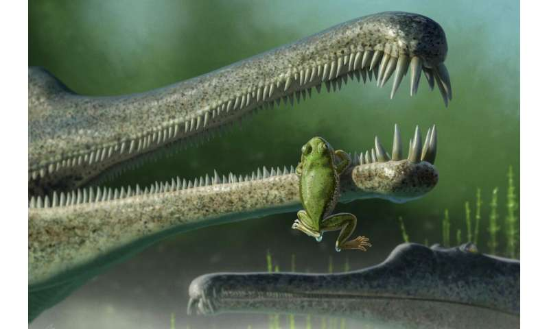 Oldest frog relative found in North America