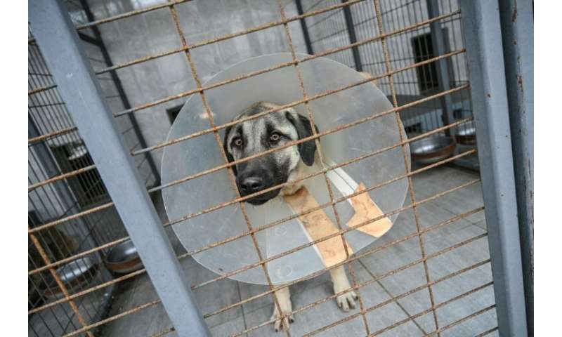 Once examined and chipped, dogs are put up for adoption and their  picture displayed in the Vetbus