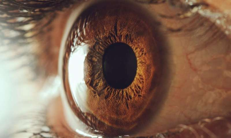 Our artificial cornea breakthrough could lead to self-assembling organs