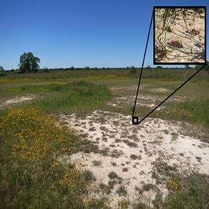 OU study finds insects crave salt and search grasslands for the limiting nutrient