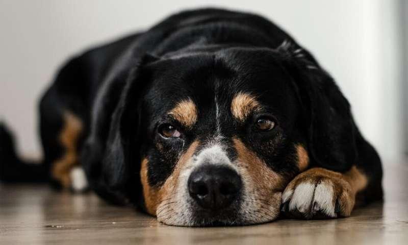 Painstaking veterinary forensics to combat animal abuse