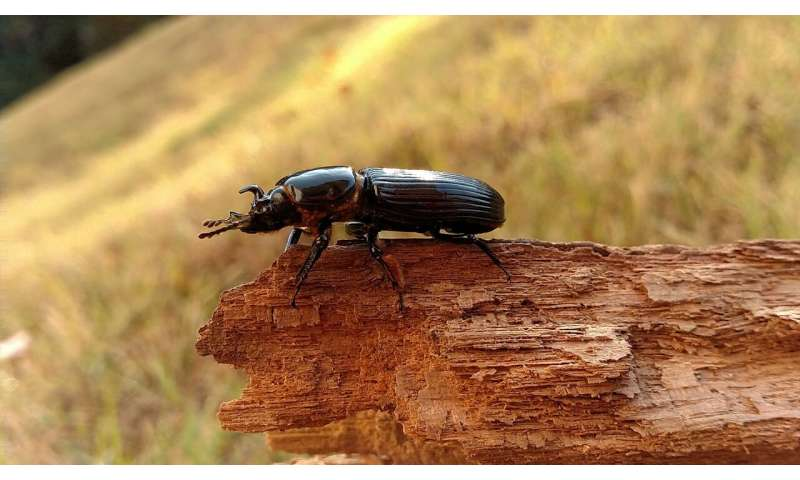 Parasites dampen beetle's fight or flight response
