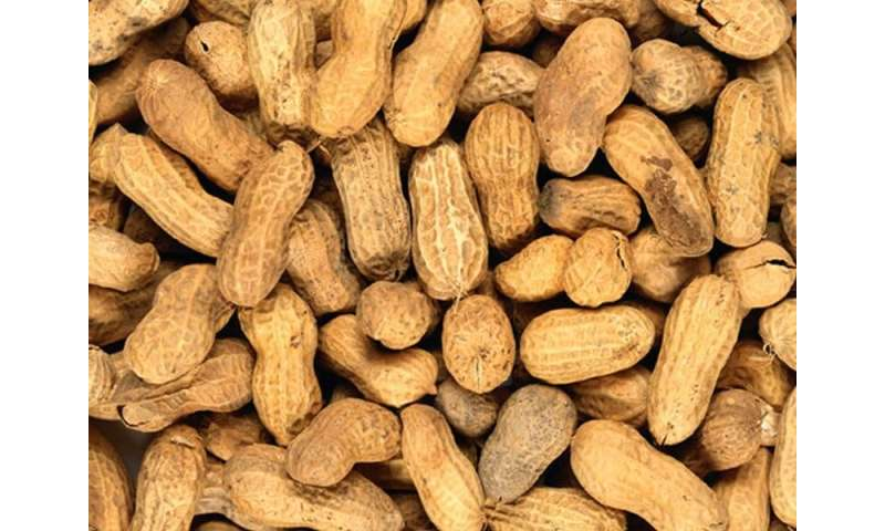 Peanut allergy patch shows middling results in trial