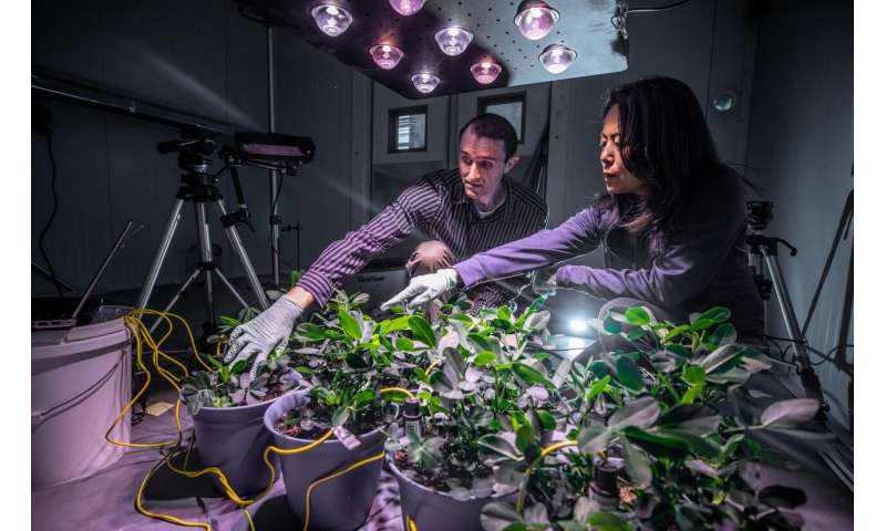 """Peanut plant's """"chemical breath"""" could give clues to drought and other stresses"""