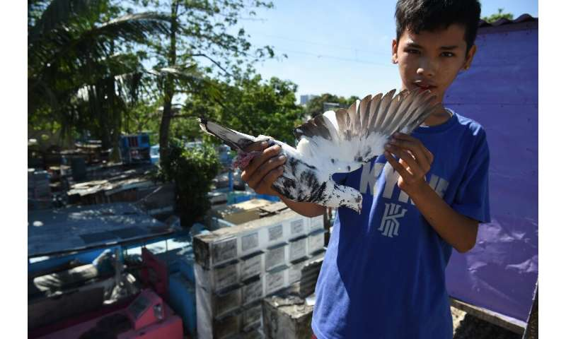 Pigeon racing is swelling popularity in the Philippines, where there are now at least 300 clubs with thousands of members