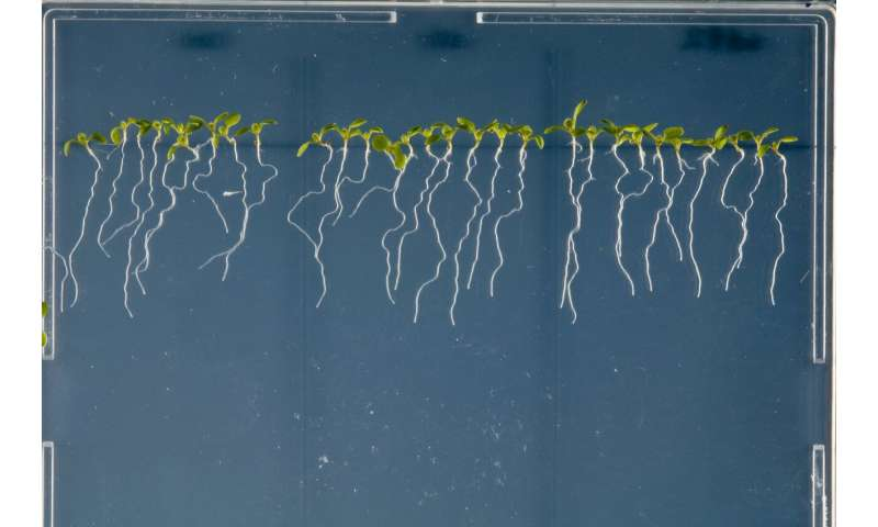 Plants and the art of microbial maintenance.