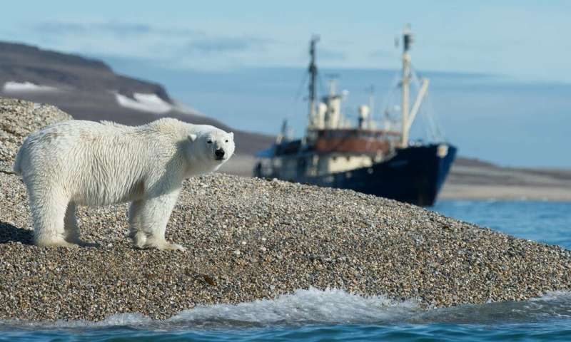 Polar Bear 'invasion': How Climate Change Is Making Human