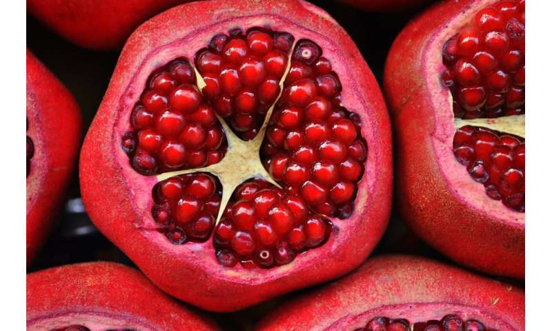 Pomegranate compound with anti-aging effects passes human trial