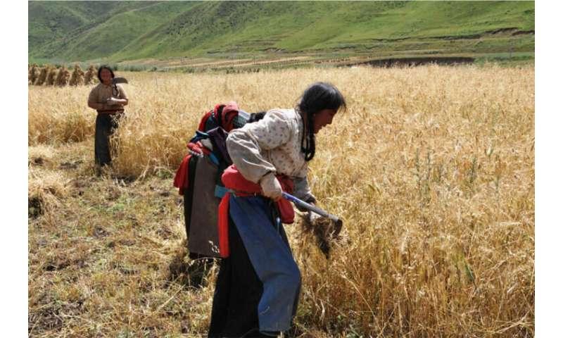 Prehistoric food globalization spanned three millennia