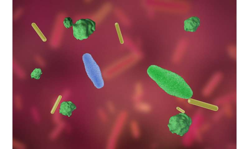 Probiotic bacteria evolve inside mice's GI tracts