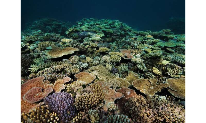 Rapid coral death and decay, not just bleaching, as marine heatwaves