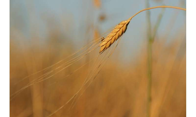 Rare crops crucial to protect Europe's food supply, boost health