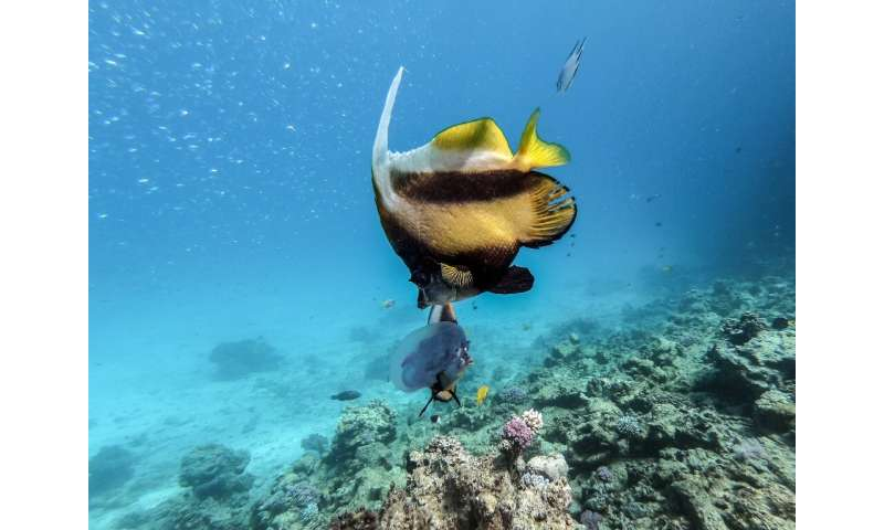 Red Sea province recently banned single use plastics, but an Egyptian academic says more needs to be done to preserve marine her