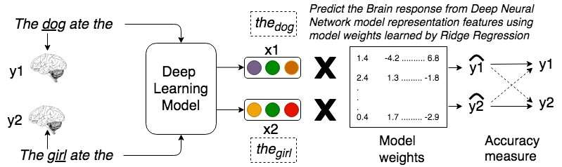 **Relating sentence representations in deep neural networks with those encoded by the brain