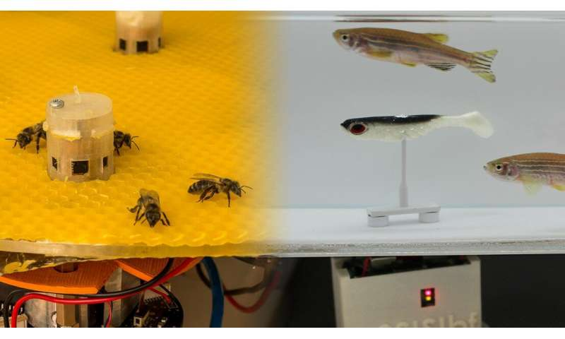Robots enable bees and fish to talk to each other
