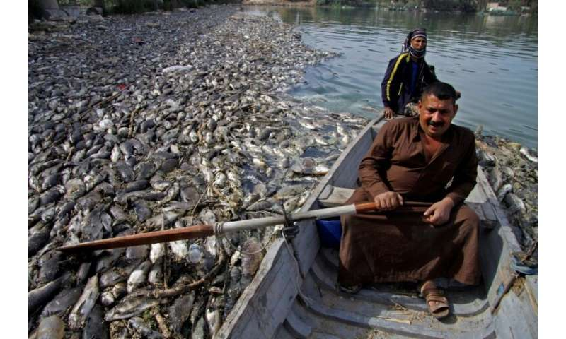 Rumours swirled over whether the fish used to prepare Iraq's signature dish masgoof were sick or the Euphrates River had been po