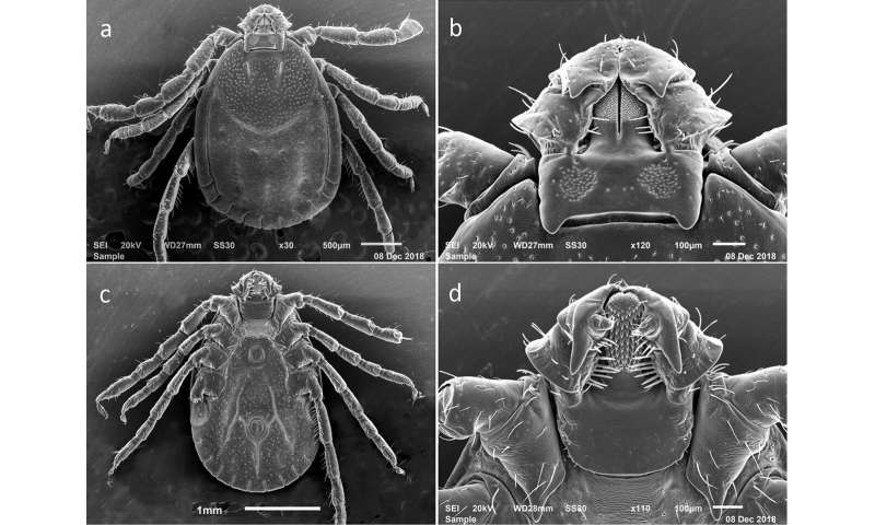 Rutgers researchers contribute to visual guide to identify invasive self-cloning tick