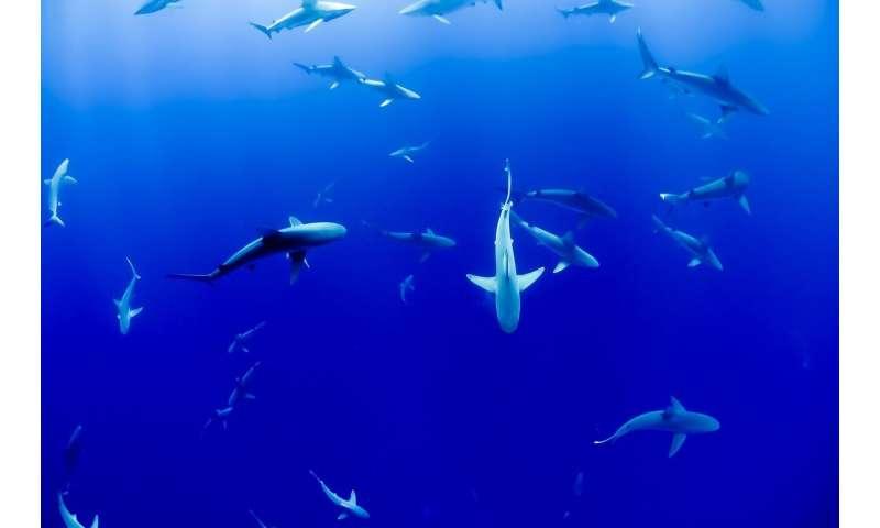 Researchers discover prehistoric shark species