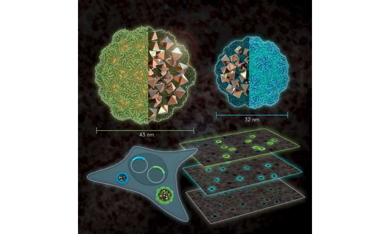 Size matters: color imaging of gene expression in electron microscopy.