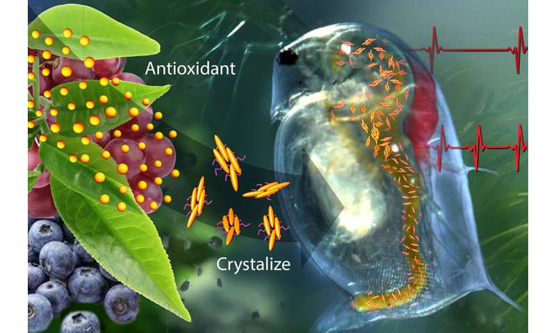 Smart antioxidant-containing polymer responds to body chemistry, environment