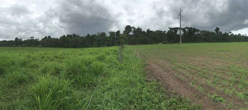 Soil communities threatened by destruction, instability of Amazon forests