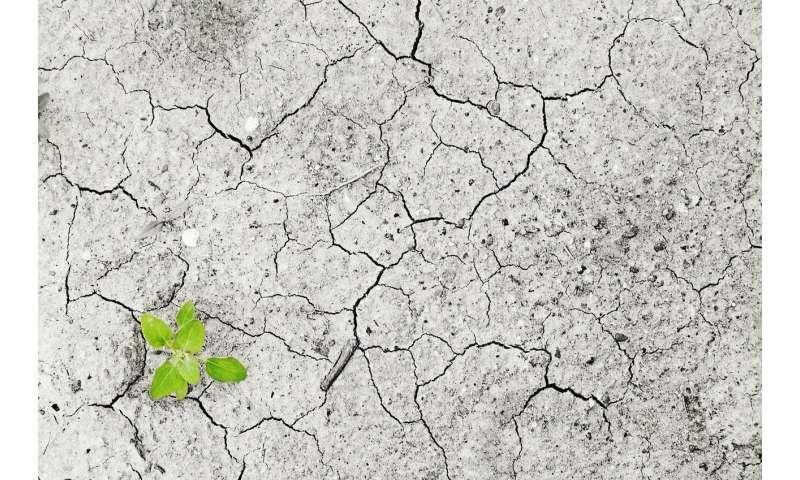 soil water