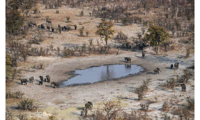 Some experts say the number of elephants in Botswana has almost tripled over the last 30 years