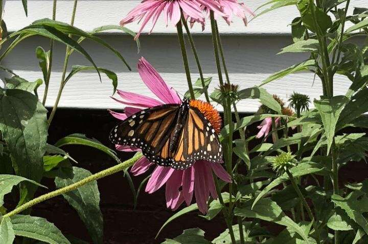 Species facing climate change could find help in odd place: Urban environments