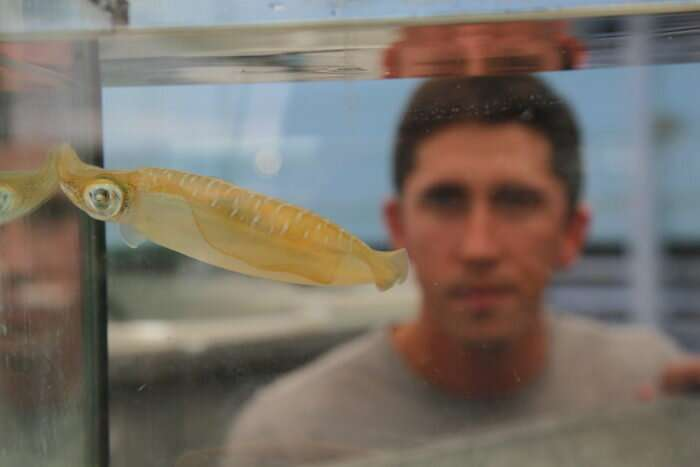 Squid could thrive under climate change