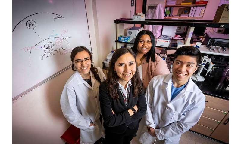 Study: Drugs reprogram genes in breast tumors to prevent endocrine resistance