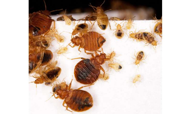 Study: Landlord disclosure of bedbugs cuts infestations, creates long-term savings