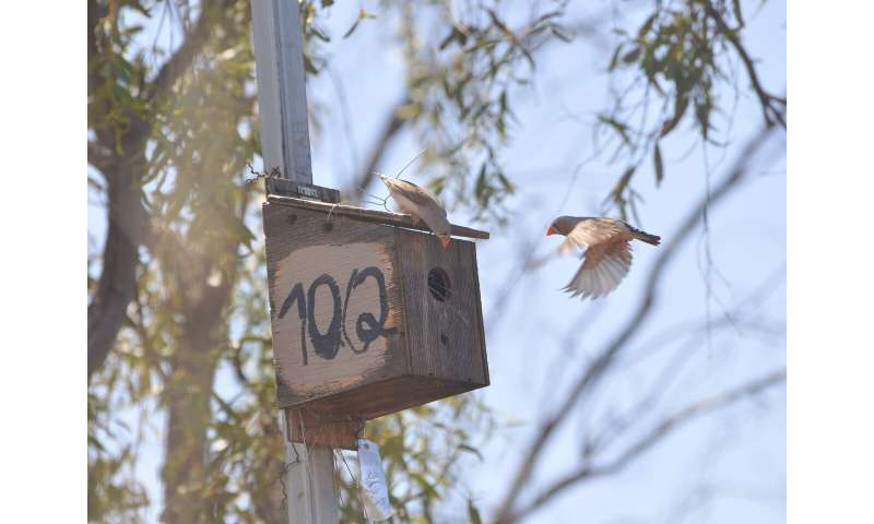 Study shows birds use social cues to make decisions