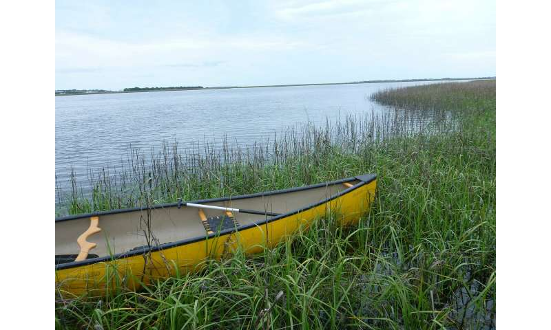 Study yields new clues to predict tipping points for marsh