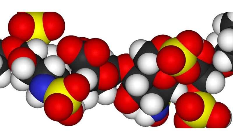 Sugar entering the brain during septic shock causes memory loss