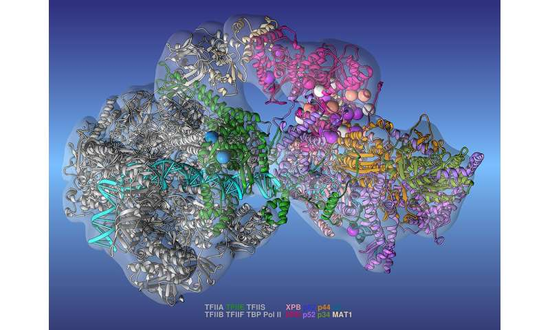 Researchers create most complete model of complex protein machinery